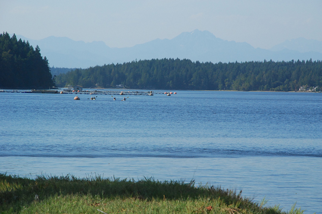 Coho rearing site in Peale Passage